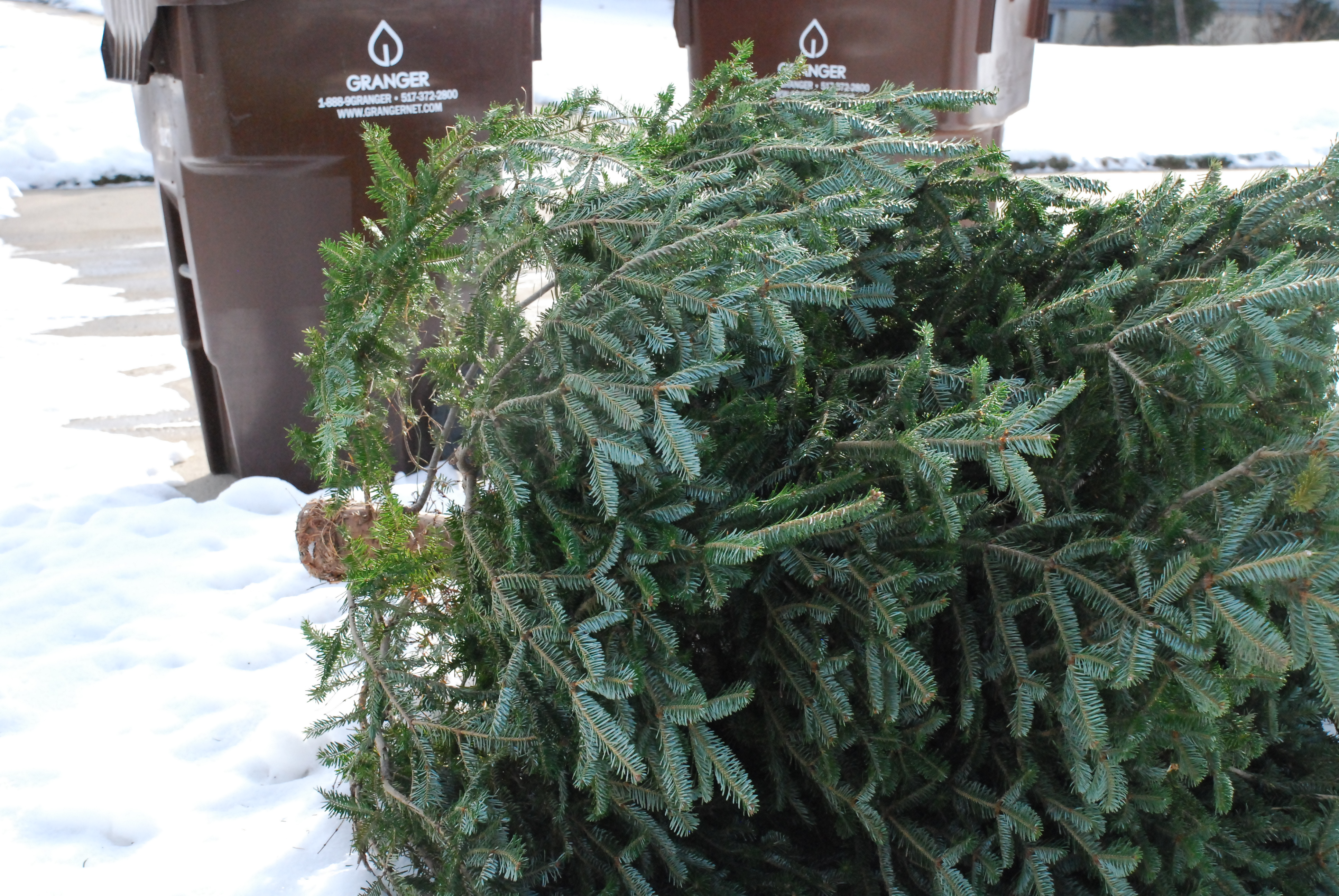 Granger to offer Christmas tree collection services   Granger