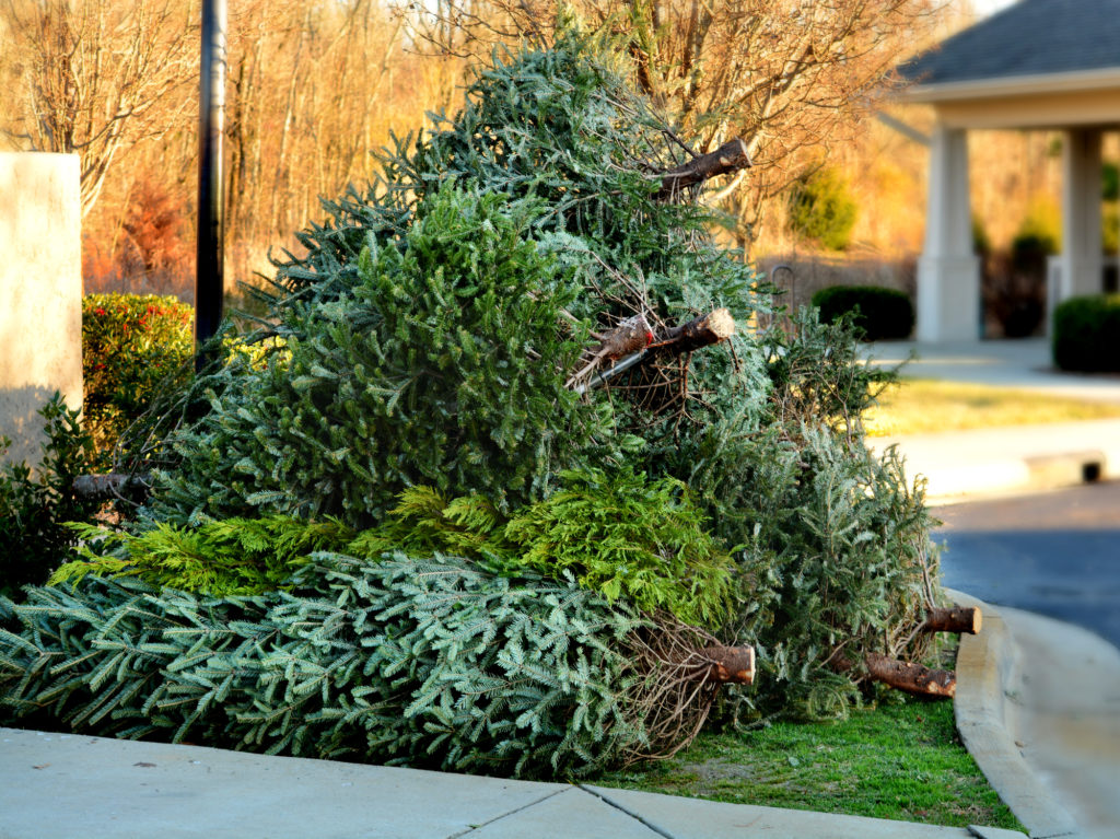 Used Christmas tree in front yard by curb.